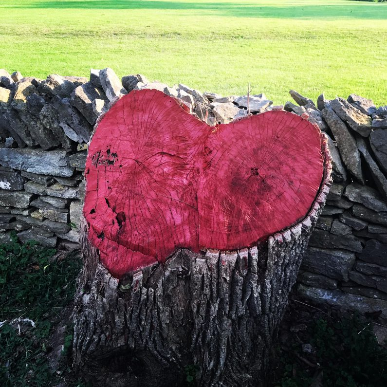 Kentucky heart-shaped tree stump Woodford County